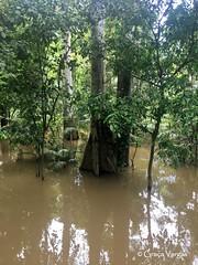 Amazonas (Graça Vargas) Tags: ©2018graçavargasallrightsreserved graçavargas amazonas manaus rio river rionegro appleiphone6s iphone