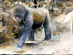 It must be here somewhere ... (boeckli) Tags: rx100m6 000619 ddg topaz topazstudio textures texturen texture textur deepdreamgenerator gorilla zoo tarongazoo sydney newsouthwales australia tier tiere animal animals outdoor 7dwf