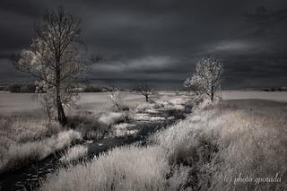 Contrasty Landscape