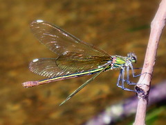 preciosas 1 (saramadridyg Ana Isabel C Nieto) Tags: agua rio arboles colores vida naturaleza