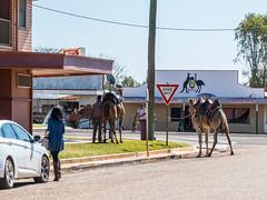 Camels at Australian Hotel Burke St Boulia Queensland P1030404t (john.robert_mcpherson) Tags: camels australian hotel burke st boulia queensland