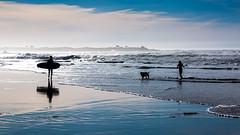 6534 At the Beach (1) (foxxyg2) Tags: blue sea ocean beach surfing leisure sky sand surf water asilomar california