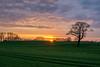 Sonne hinter Feldern (rahe.johannes) Tags: schleswigholstein felder feld felm landschaft baum sonnenuntergang sonne wolken himmel