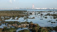 Living reefs at Cyrene (wildsingapore) Tags: cyrene reef landscape singapore marine intertidal shore seashore marinelife nature wildlife underwater wildsingapore