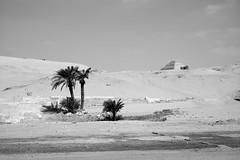 Saqqarah (Dimitri Tenezakis) Tags: palmtree pyramid saqqarah architecture monument egypt ancient archaeology desert