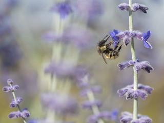 Good morning, bees