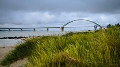 Tag 24 (1) (uwesacher) Tags: holstein schleswik deutschland pause gras meer wasser himmel brücke bucht baum landschaft fehmarn sund sand strand wolken ostsee wind wetter segelschiff fkk insel hinweisschild düne fehmarnsundbrücke
