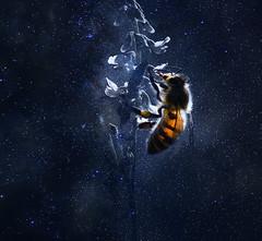 night lights (marianna_armata) Tags: night lights stars bee flower macro sliders sunday psd photoshop edit fun mariannaarmata
