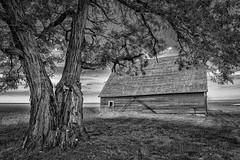 Shade (D E Pabst Photography) Tags: agriculture blackandwhite tree wooden barn locust garfieldcounty pomeroy farm washington southeastwashington rustic monochrome