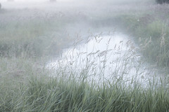 sway (wintercove) Tags: meadow grasses pond fog mist early quiet summer alaska