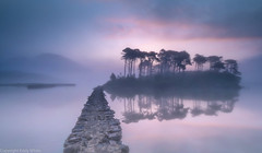 Path to The Pines (whidom88) Tags: connemara ireland co galway mist early morning