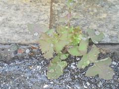 281 (en-ri) Tags: foglie leaves verde gocce sony sonysti