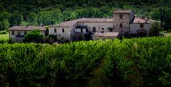 Vineyard in Chianti (Beppe Rijs) Tags: 2018 italien juli sommer toskana italy july summer tuscany chianti vineyard weinberg