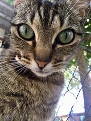 Eyes😻 (LUCYPHOTO_6) Tags: nature kitten kittens catstagram cutie pets cat cats pet petstagram