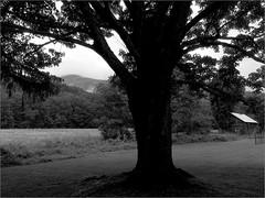Untitled_134 (Chris Protopapas) Tags: iphone westkill nystate tree landscape valley rural greenecounty catskills