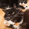 """Mum! Tell them, Mum! It's mine! My catnip sardine! Tell them now, Mum!"" (VWGolf65) Tags: catoldtuxedoblackandwhite elderly handsome"