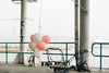 Balloons. (t-a-i) Tags: 50mm a7rii a7rmkii a7r2 balloons hk hkg hongkong ilce7rm2 kwantong sony sonya7rii sonyilce7rm2 sonyα7rii voigtlander voigtlander50mmf15 voigtlandernokton50mmf15 voigtländer voigtländer50mmf15 α7rii kowloon