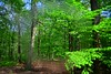 The fresh, young green (Tobi_2008) Tags: wald forest bäume trees grün green sachsen saxony deutschland germany allemagne germania