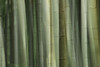 Bamboo Blend (Goose Spittin' Image Photography) Tags: japan bamboo blurred jan 2018