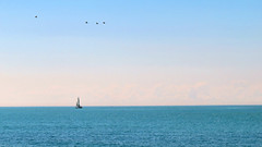 Sailboat, Lake Ontario, Canada (duaneschermerhorn) Tags: blue sky water lake waves sailboat seagulls sailing boat horizon