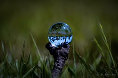 Nature Refracted In Crystal Ball 🌏 (Ananya Saha) Tags: nikon trees scenery black blue sky white clouds field refraction green grass holding little trunk crystal ball closeup earth day