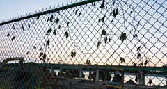 Construction Site (UrbanphotoZ) Tags: constructionsite fence chainlink ivy dead highway elevatedhighway steamshovel traffic river hudsonriver dirt cat steamroller plow westside manhattan newyorkcity newyork nyc ny