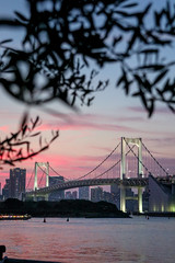Olive shade (sapphire_rouge) Tags: seaside 東京 odaiba お台場 湾岸 japan tokyo レインボーブリッジ sunset rainbowbridge