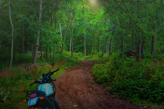 Forest Trails on the Royal Enfield Himalayan (primosavage) Tags: royal enfield himalayan trailquest bromsberrow adventure motorcycle expeditions
