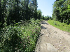 road in forest (VERUSHKA4) Tags: way verdure greens plant grass canon europe russia nord travel northerneurope flower summer july summertime arkhangelskyregion ciel vue view solovetskyarchipelago nature island light sunlight clover