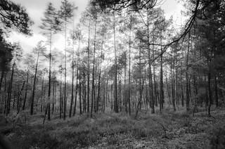 Skogen. The Forest.