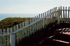 Pacific Ocean (bior) Tags: leicam3 portra160nc summicron 35mmfilm expiredfilm rangefinder pacificocean pacificcoasthighway ivy whitepicketfence shadow