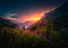 After the Rain has stopped (Croosterpix) Tags: landscape nature sunset mountains alps flowers sky clouds sony a7r hiking samyang14mm28