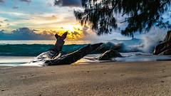 Old Wood (Migge88) Tags: seychellen urlaub himmel clouds wolken sky blau blue gelb meer sychellen seychelles mahe anse soleil paradies paradise strand beach sea sand baumstamm tree trunk alpha 6500 son welle wave stein stone baum sunset sonnenuntergang