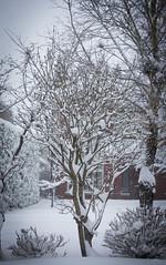 Snow Storm (C) 2018