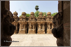 8058 - Kailasanathar Temple ,Kanchipuram (chandrasekaran a 50 lakhs views Thanks to all.) Tags: traditions culture hinduism temples dravidianarchitecture asi saivaism india tamil nadu heritage pallavas rajasimha architecture structures buildings kailasanathar lordsiva canon60d tokina1116mm sculptures