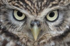The stare... (Gary Neville) Tags: sony sonyrx10iv rx10m4 rx10iv iv garyneville