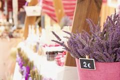 Tesoro: maceta con plantas (AriCatalán) Tags: maceta pink market mercado rosa morado plant planta lavanda lavender flowers juegolvm brihuega escueladejackie