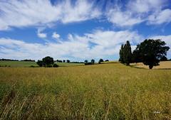 LANDSCAPE (Fimeli) Tags: natur nature landschaft landscape feld bluesky himmel baum tree summer colors germany