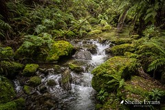 Shine Falls Walk, Hawkes Bay (flyingkiwigirl) Tags: aircurtain bird boundarystream camp family hawkesbay lake laketutira lakewaikopiro napier opouhai quality walk water shinefalls tallest waterfall