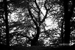 Simultanwelten (check4newton) Tags: simultaneous simultanwelten worlds spirit spiritworld geistigewelt geisterheiler schamanismus schönheit ef1450mm para parallel existence schamane