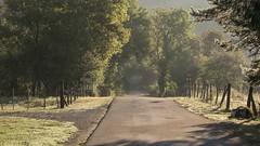 Sur la route *---- ° (Titole) Tags: road fence sunlight trees titole nicolefaton equevillon jura