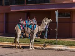 Camels at Australian Hotel Burke St Boulia Queensland P1030408x (john.robert_mcpherson) Tags: camels australian hotel burke st boulia queensland