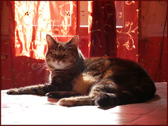 P1150311 18x24 (M64RM) Tags: gattoeuropeotabby cat