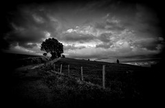 The Lane (Missy Jussy) Tags: blackwhite blackandwhite bw mono monochrome moodylandscape moody atmosphere sky clouds trees fields fence barbwire lane path road light vignette newhey landscape lancashire england uk 24mm primelens fixedfocallength canon 5d canon5dmarkll canon5d canoneos5dmarkii ef24mmf28