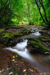 (Masako Metz) Tags: sweetcreekfallstrail mapleton oregon pacific northwest usa nature water landscape forest trees green rocks moss stream