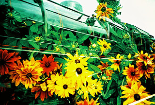 Lomo – flowers in the engine