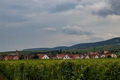 Эгишем в виноградниках