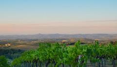 Tuscany (crismdl) Tags: sangimignano tuscany toscana italia italy sunset europe summes pordosol pôrdosol