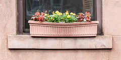 Boxed window (A Different Perspective) Tags: nyc newyork usa box brooklyn brown flower garden plant stone window