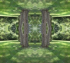 The portal in the yard (rhonda_lansky) Tags: plants nature landscape surreal place dreamland dragoneye lansky rhondalansky symmetry symmetricalart mirror mirrorart michigan